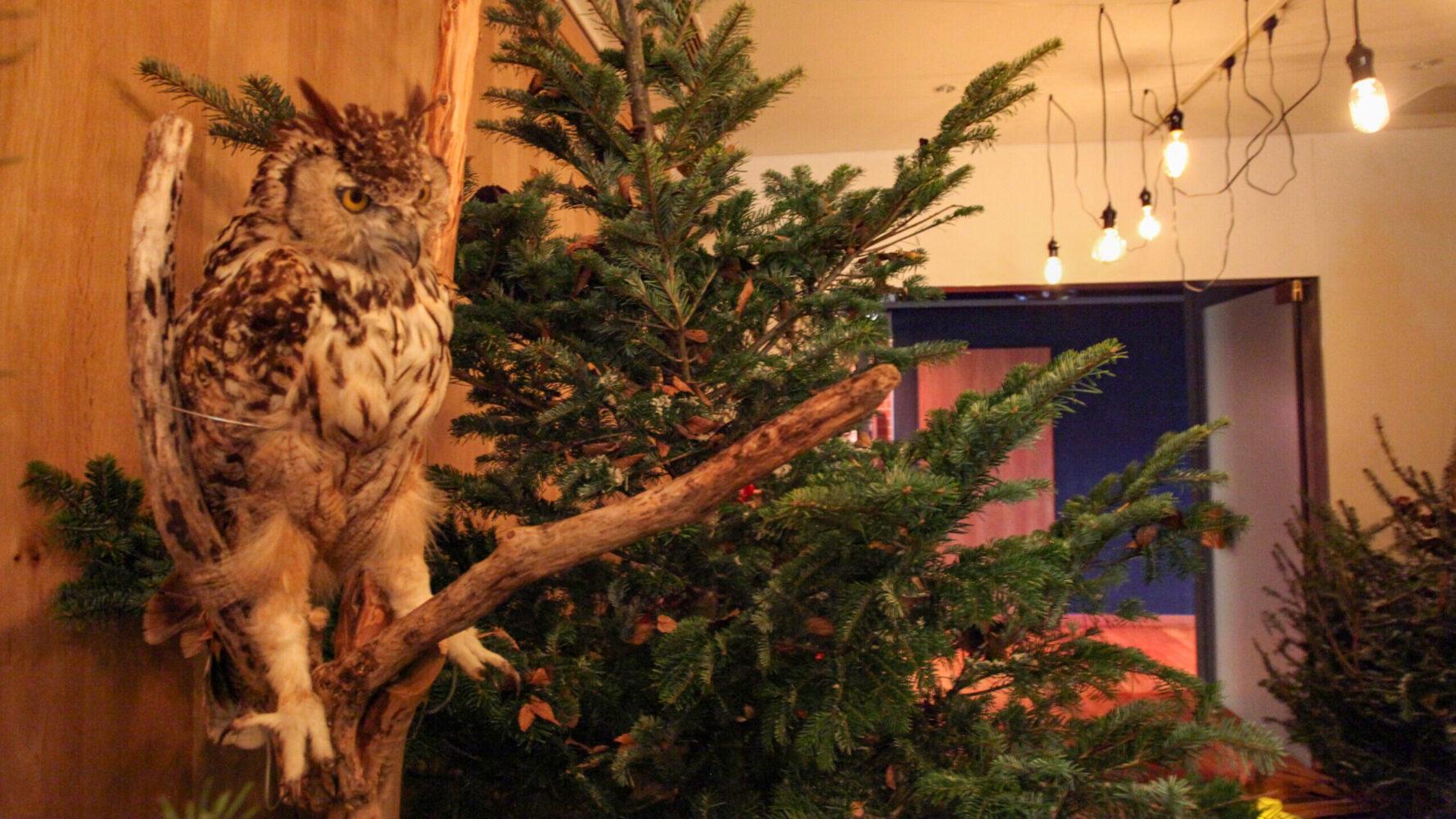 (marunouchi) HOUSE Christmas display 事例画像6