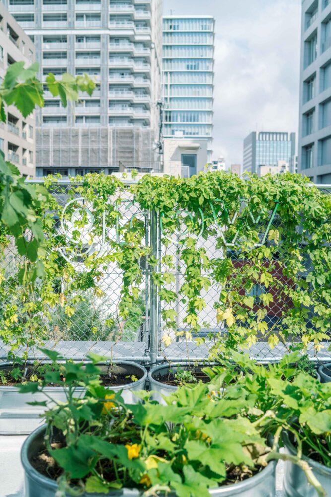 TOKYO MIDORI LABO. 事例画像11