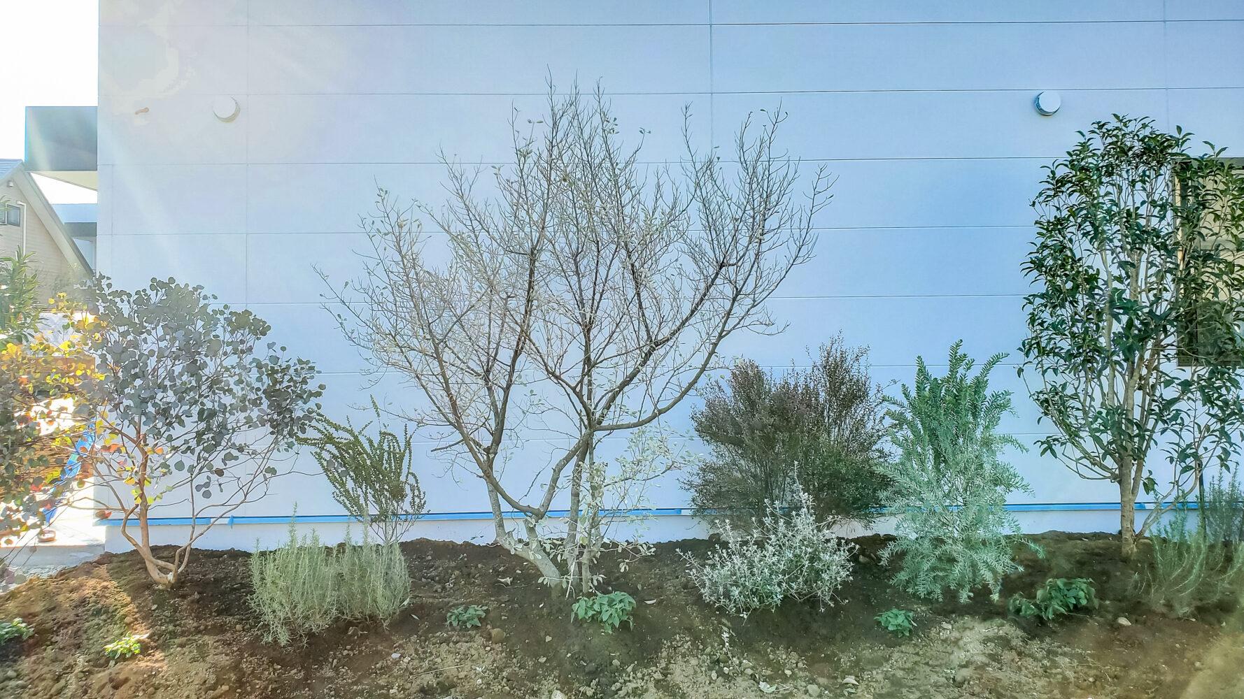 認定こども園 モンテッソーリ光の子 事例画像6